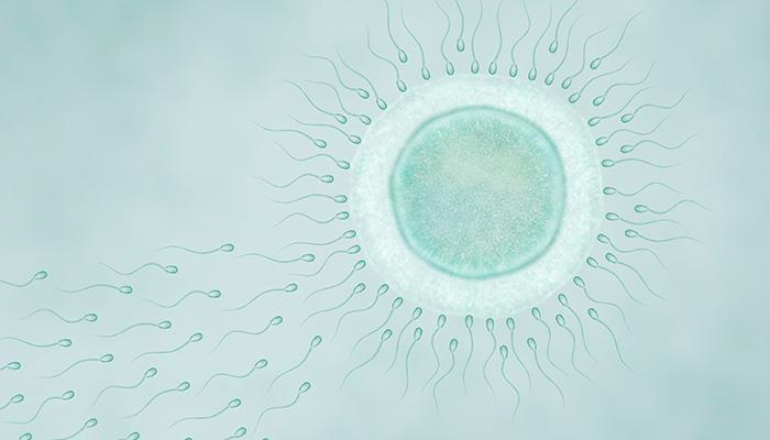 Etapele sarcinii. Transformari si evolutie pentru mama si pentru fat.