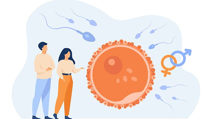 Reproducerea umana – ghidul nestiutorului